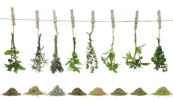 ziola i przyprawy (2)